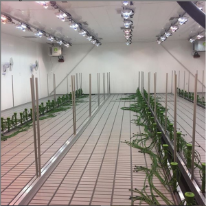 Rolling Benches With Trellies For Hydroponics