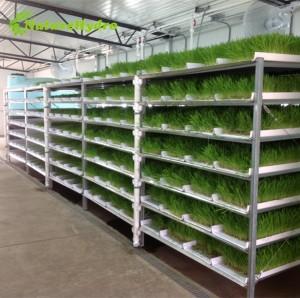 Commercial barley fodder system