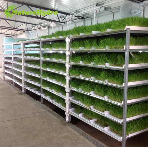 Commercial barley fodder system Featured Image