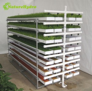 Daily output 125kg/layer micro green sprouting barley fodder system