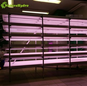 Automatic micro green sprouting machine system