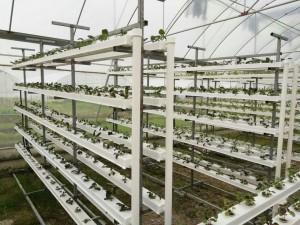 I shaped nft grow system #2