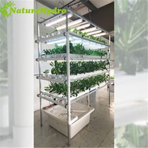 NFT Gully Hydroponic NFT system Vertical