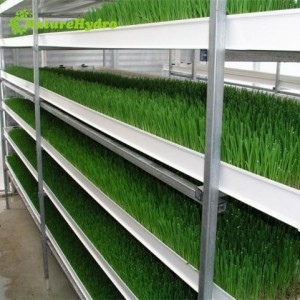 Daily output 35kg/layer hydroponic fodder system for livestock