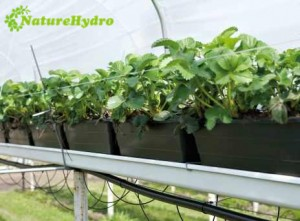 13.9L hydroponic bucket system tomatoes grow pots system