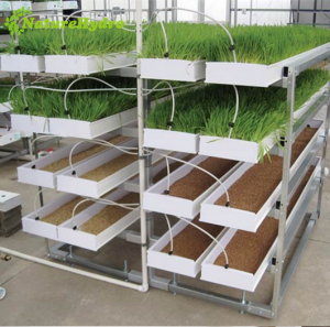 Daily output 25kg/layer hydroponic sprouting fodder system barley grass