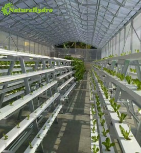 Hydroponic NFT gully system vertical