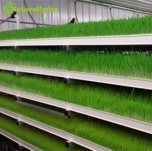 hydroponic fodder growing system,Daily output 60kg/layer barley fodder system