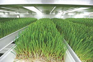 Animal fodder container microgreen system